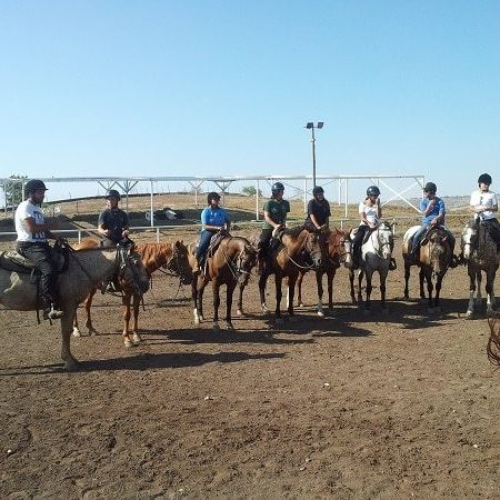 horse-training-ramot-ranch